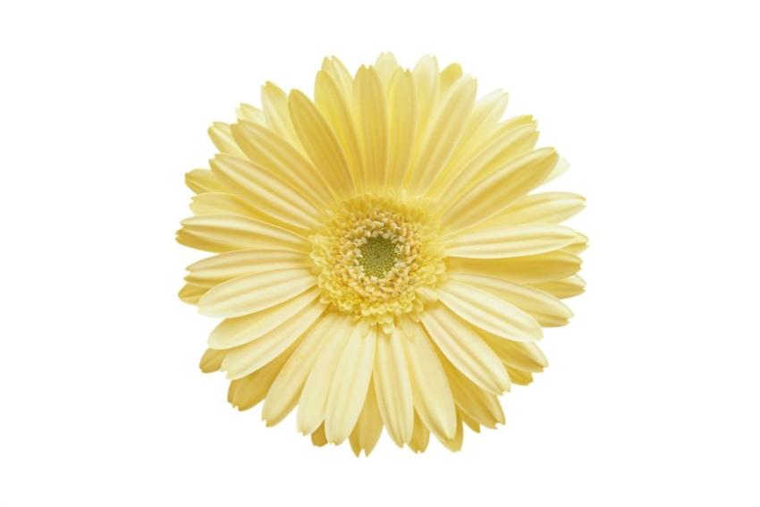 アレンジメントに入れやすい黄色い花