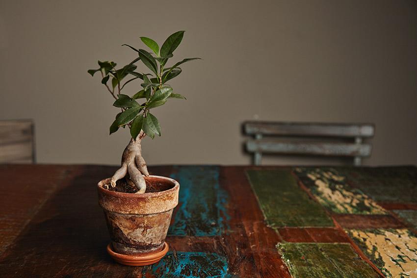 還暦など節目となる誕生日におすすめの観葉植物