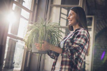 観葉植物でお祝いを!プレゼントに選びたい素敵な観葉植物とは