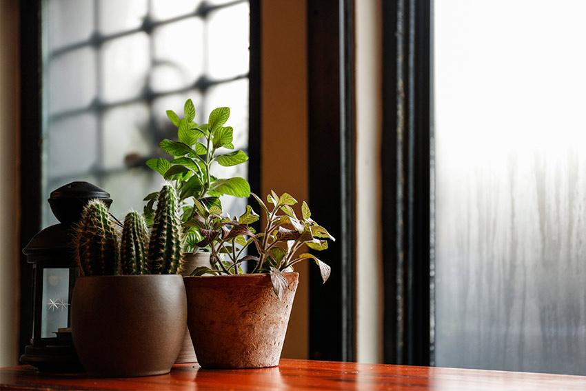 観葉植物の特徴を知ることから始めよう