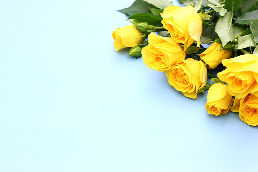 バラを贈る理由