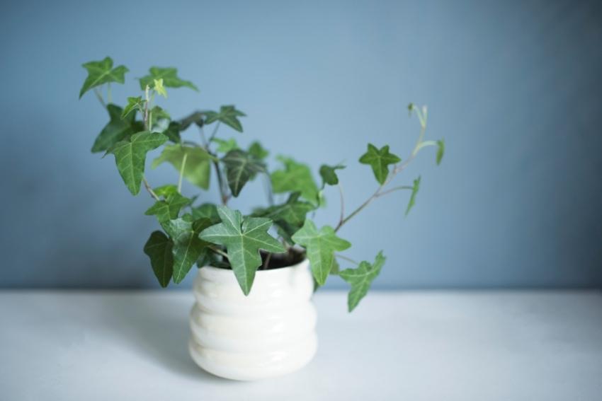 インテリアとして飾れる観葉植物の選び方