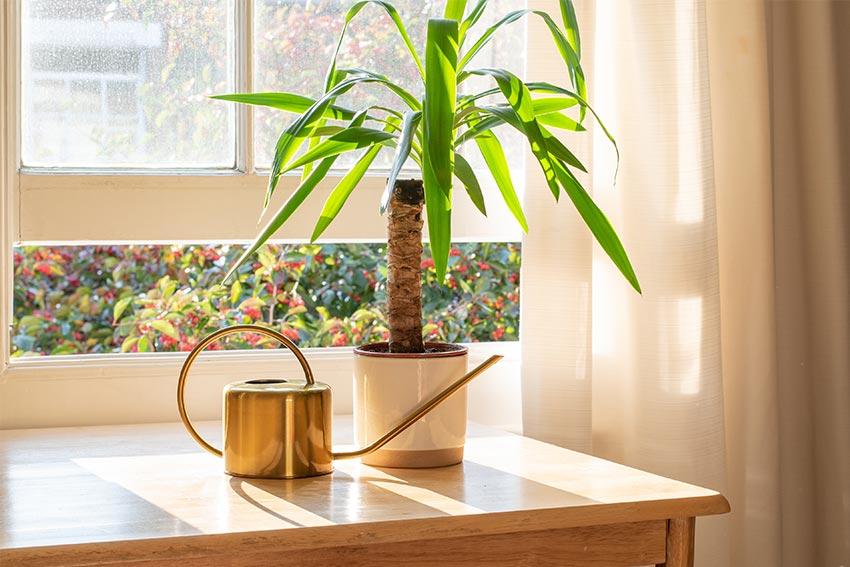 幸運や成長の意味を持つ観葉植物がおすすめ
