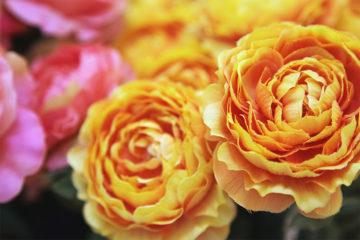 造花をおしゃれなインテリアに!おすすめのアレンジ方法をご紹介