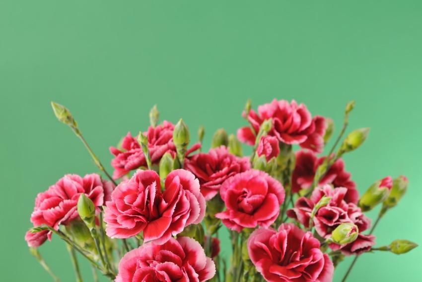 定番の花束