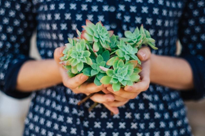手作りの寄せ植えをプレゼントしよう