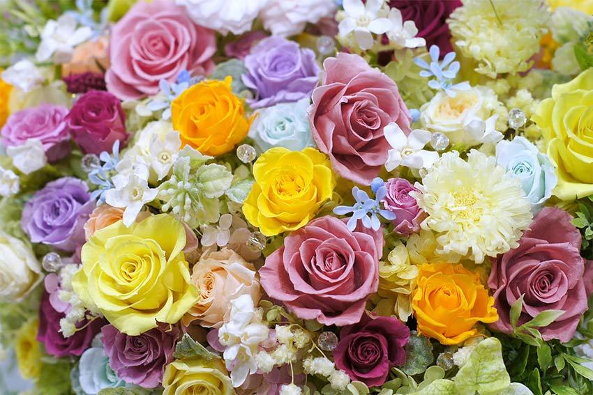 華やかで美しい色合い