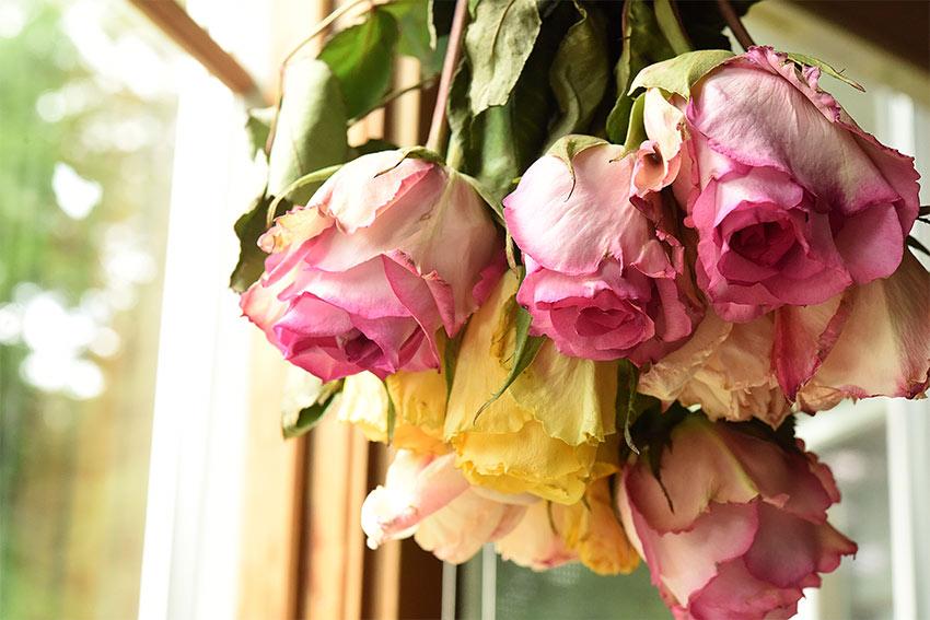 壁を花で彩ろう!素敵な壁飾りのアイデアをご紹介