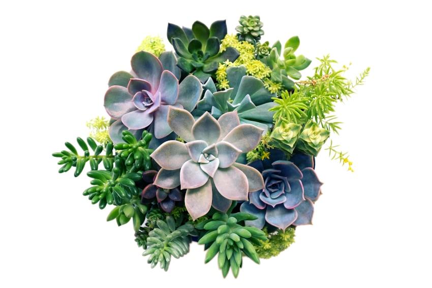 多肉植物の3つのタイプ