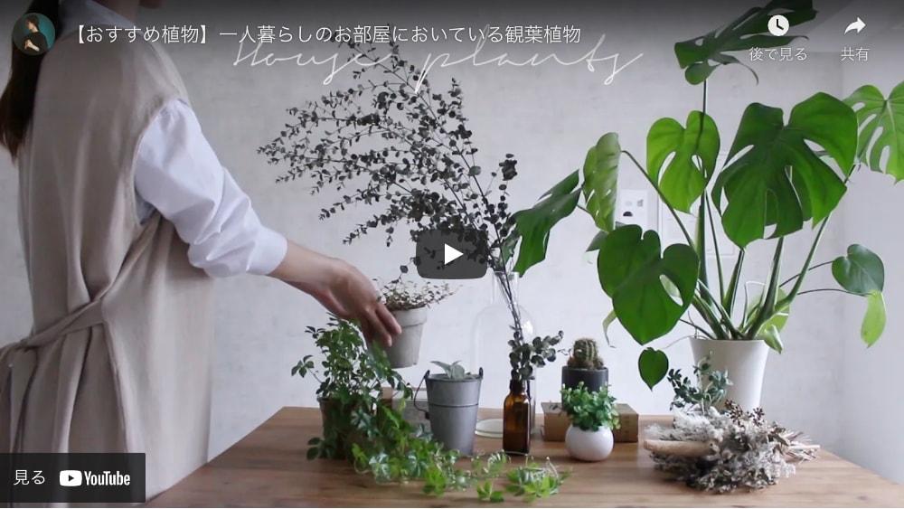 【おすすめ植物】一人暮らしのお部屋においている観葉植物