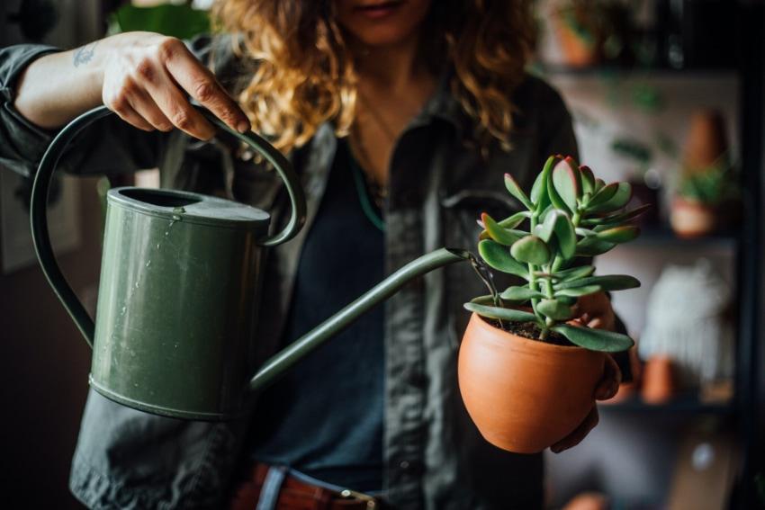 観葉植物の基本の育て方