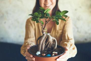 初心者にもおすすめ!育てやすい観葉植物をご紹介