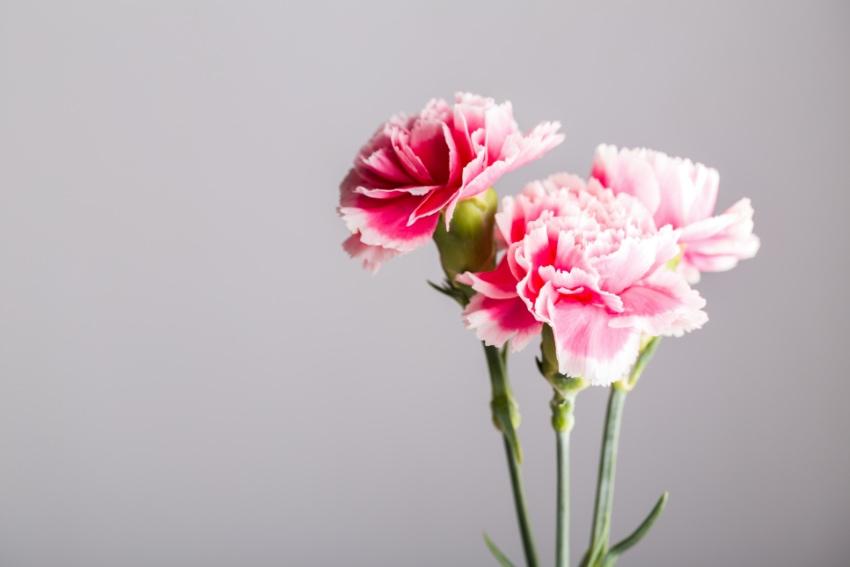 着色に向いている花とは?