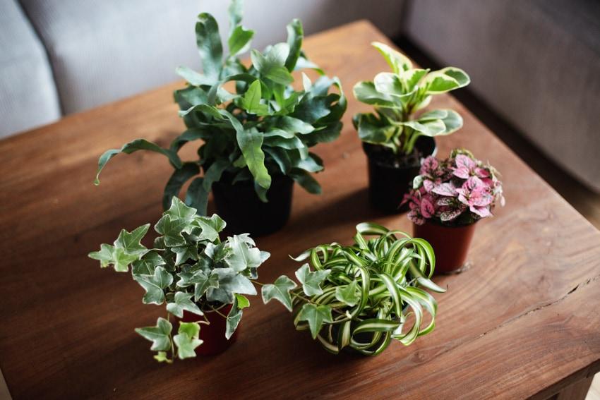 スモールサイズの観葉植物