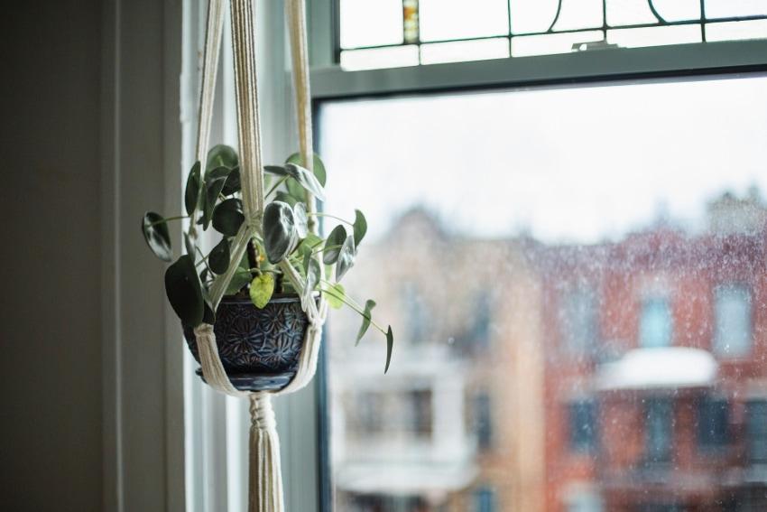 ハンギングできる観葉植物