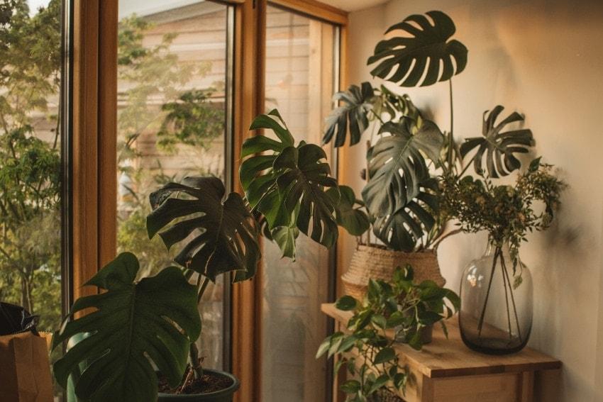 空間にあった観葉植物を飾ることが大切