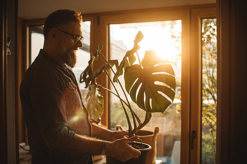 ミドルサイズの観葉植物
