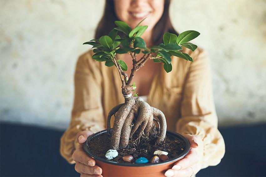 観葉植物を上手に育てるためのポイント