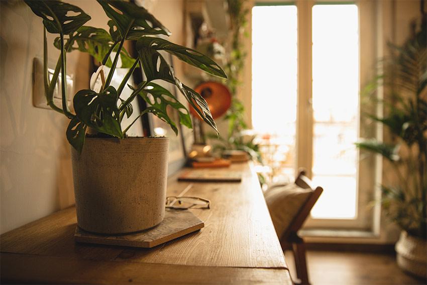 種類も豊富!室内に観葉植物を飾って癒しの空間を手に入れよう