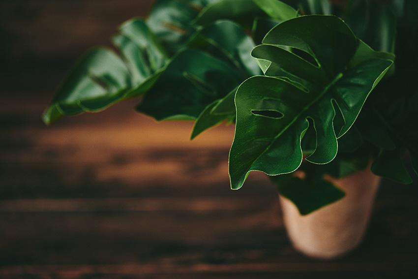 観葉植物の楽しみ方